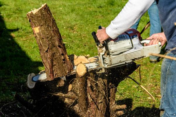Best Gas Chainsaw for the Money